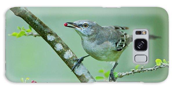 Northern Mockingbird (mimus Polyglottos Galaxy Case