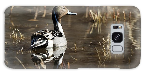 Handsome Northern Pintail Galaxy Case