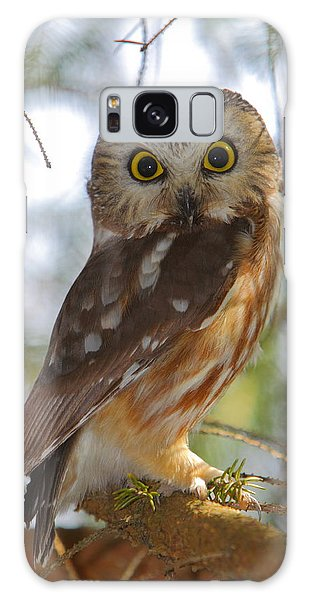 Northern Saw-whet Owl Galaxy Case