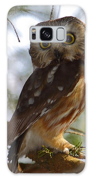Northern Saw-whet Owl II Galaxy Case