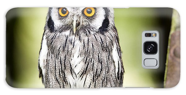 Northern White Faced Owl Galaxy Case