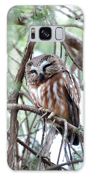 Northern Saw-whet Owl 2 Galaxy Case