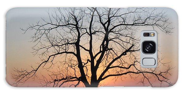 November Walnut Tree At Sunrise Galaxy Case