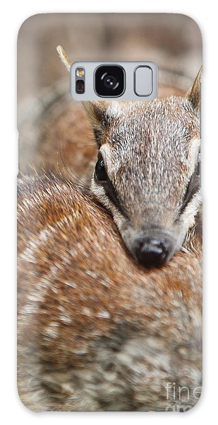 Numbats Galaxy Case