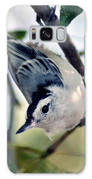Nuthatch 623 Galaxy Case