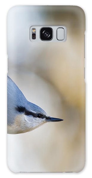 Nuthatch In The Classical Position Galaxy Case