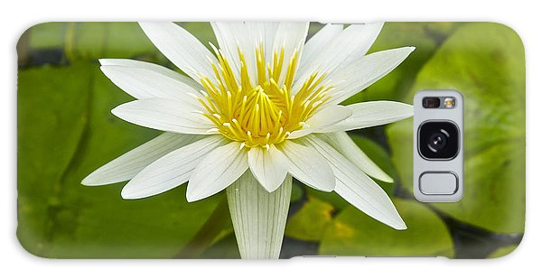 Nymphaea Water Lily Galaxy Case by Venetia Featherstone-Witty
