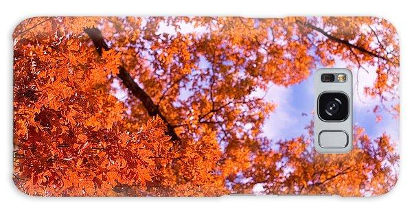 Oak In Evening Sun Galaxy Case