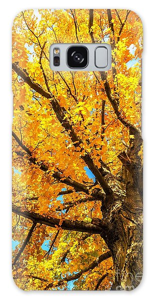 Oak In The Fall Galaxy Case