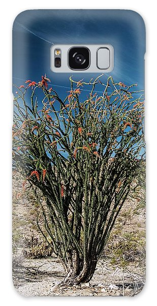 Desert Flora Galaxy Case - Ocotillo (fouquieria Splendens) In Flower by Bob Gibbons/science Photo Library
