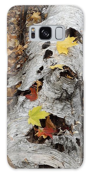 Old Fallen Birch Galaxy Case