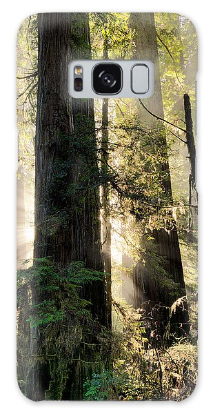 Old Growth Forest Light Galaxy Case
