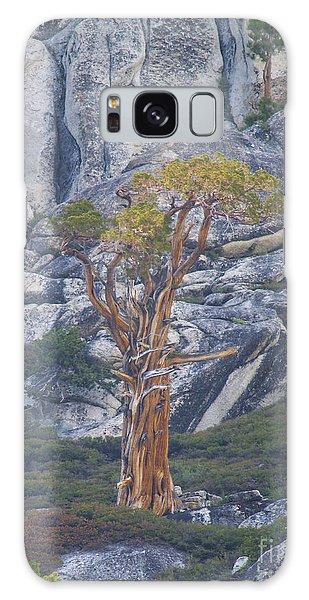 Old Juniper Pine  Galaxy Case