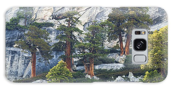 Old Juniper Pines Rule Galaxy Case