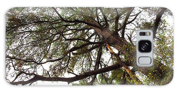 Old Pine Galaxy Case