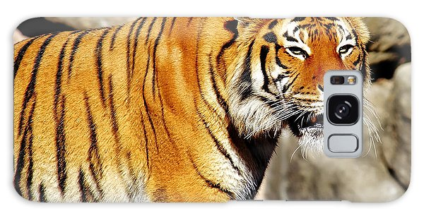 On The Prowl Galaxy Case by Jason Politte
