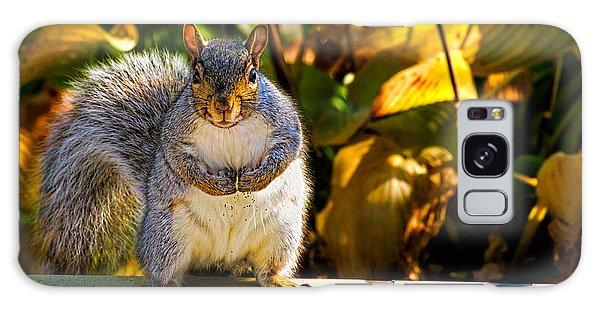 One Gray Squirrel Galaxy Case