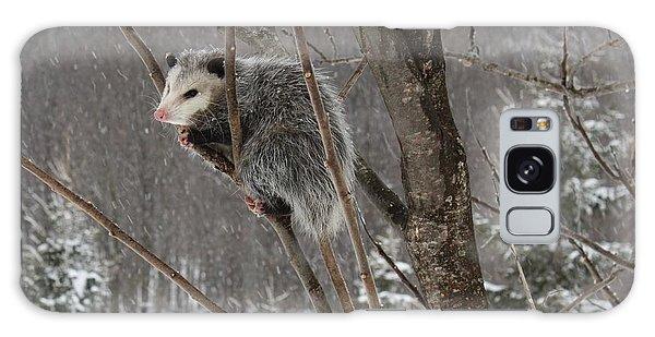 Opossum In A Tree Galaxy Case