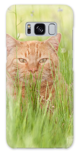Orange Cat In Green Grass Galaxy Case