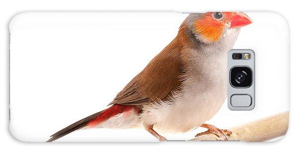 Orange-cheeked Waxbill Estrilda Melpoda Galaxy Case by David Kenny