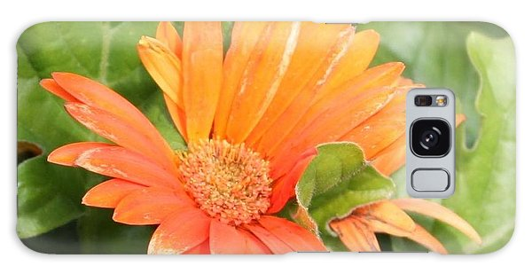 Orange Daisy  Galaxy Case