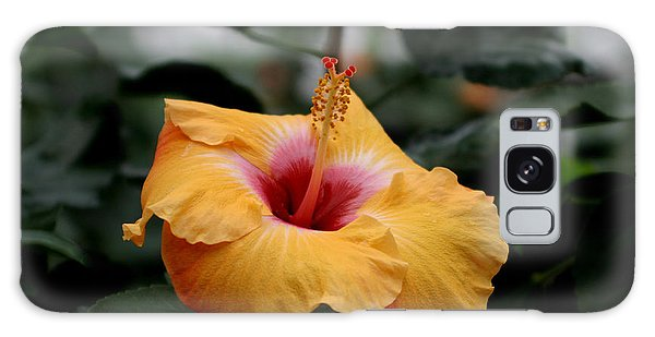 Orange Hibiscus Galaxy Case by Living Color Photography Lorraine Lynch