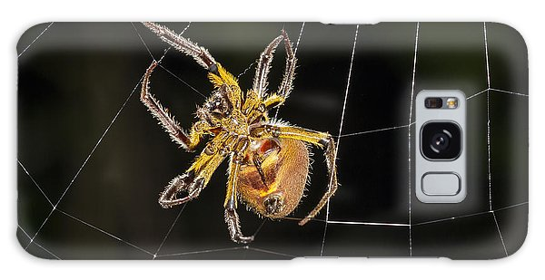 Orb-weaver Spider In Web Panguana Galaxy Case by Konrad Wothe