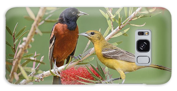 Orchard Oriole Pair Galaxy Case