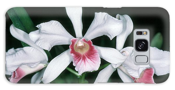 Orchid 10 Galaxy Case by Andy Shomock
