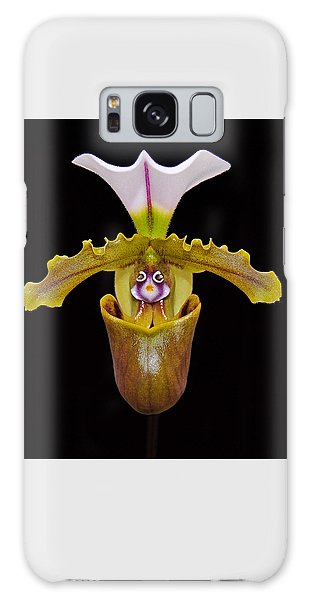 Orchid Paphiopedilum Fairrieanum Galaxy Case