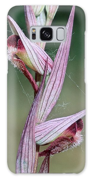 Orchidaceae Galaxy Case - Orchid (serapias Vomeracea) by Bruno Petriglia/science Photo Library