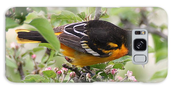 Oriole With Apple Blossoms Galaxy Case