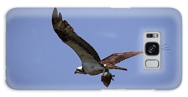 Osprey Carrying Fish  Galaxy Case