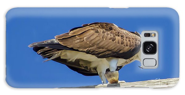 Osprey Eating Lunch Galaxy Case by Dale Powell