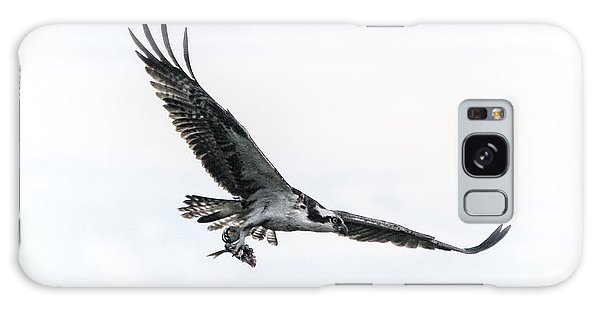 Osprey In Flight Galaxy Case