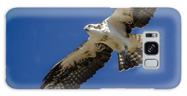 Osprey In Flight Galaxy Case by Dale Powell
