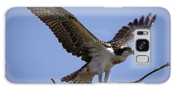 Osprey In Nest Ready To Fly Galaxy Case