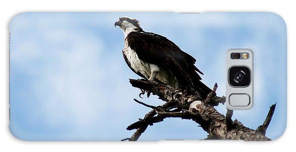 Osprey On Perch Galaxy Case