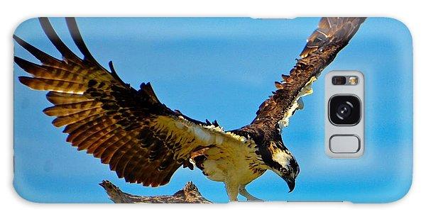 Osprey Spreading It's Wings Galaxy Case by Pamela Blizzard