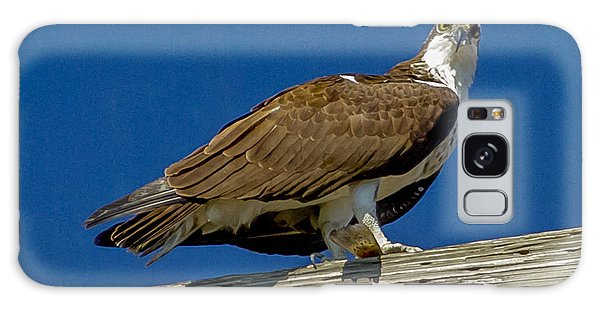 Osprey With Fish In Talons Galaxy Case by Dale Powell