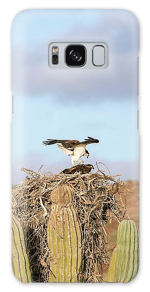 Ospreys Nesting In A Cactus Galaxy Case