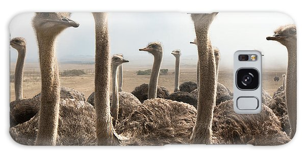 Outdoors Galaxy Case - Ostrich Heads by Johan Swanepoel