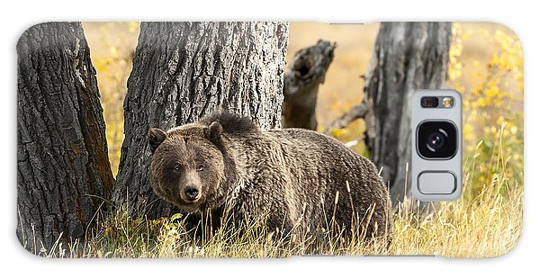 Grizzly Bears Galaxy Case - Out For Lunch by Sandra Bronstein