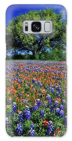 Paintbrush And Bluebonnets - Fs000057 Galaxy Case