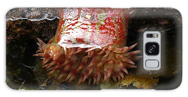 Painted Anemone Galaxy Case by Gayle Swigart