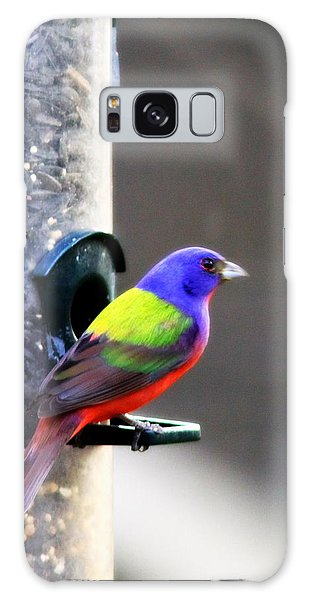 Painted Bunting - Img 9757-002 Galaxy Case by Travis Truelove