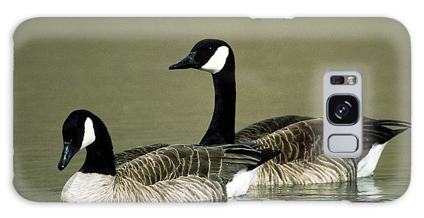 Canada Goose Galaxy Case - Pair Of Canada Geese (branta Canadensis) by William Ervin/science Photo Library