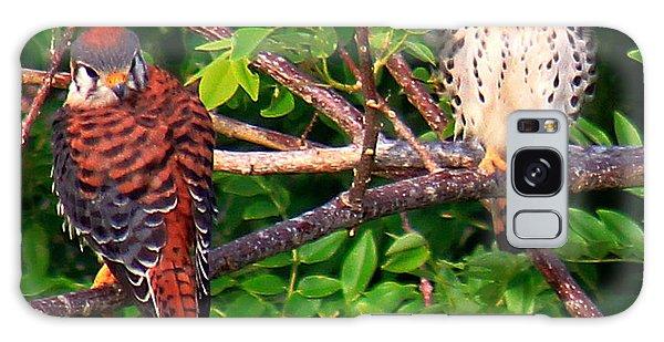 Caribbean Falcons Galaxy Case