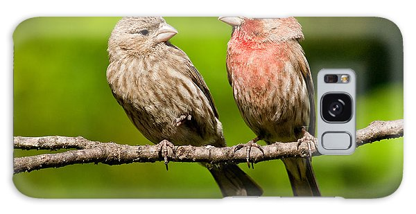 Pair Of House Finches In A Tree Galaxy Case