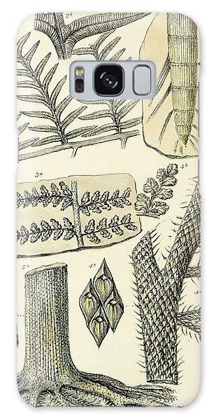 Paleozoic Flora, Calamites, Illustration Galaxy Case by British Library